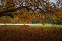 Fall in autumn park. Big branch with yellow foliage royalty free stock photography