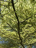 Big branches Royalty Free Stock Image