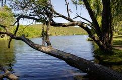 Big branches and trees on lake La Quintana. In Cordoba, Argentina stock photo
