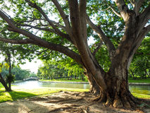 Big branches of trees with leaves on the green grass in the rive Stock Photos