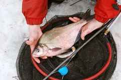 Big bream Royalty Free Stock Image