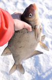 Really big bream in fisherman's hand Royalty Free Stock Image
