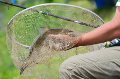 Big bream in net Royalty Free Stock Images
