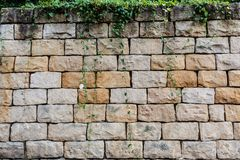Big bricks and vegetation background Stock Photos