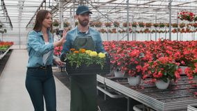 In Big Bright Industrial, Greenhouse two people Walking with Boxes Full of flowers through Rows of Growing Plants. In Big Bright Industrial, Greenhouse two stock video footage