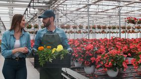 In Big Bright Industrial, Greenhouse two people Walking with Boxes Full of flowers through Rows of Growing Plants. In Big Bright Industrial, Greenhouse two stock video
