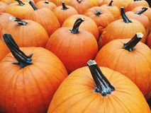 Big bright orange pumpkins Stock Image