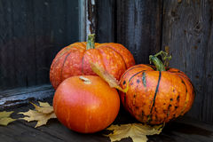 Big bright orange pumpkins on old dark wooden background Stock Images