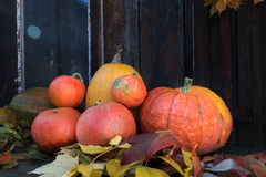 Big bright orange pumpkins on old dark wooden background Stock Photos