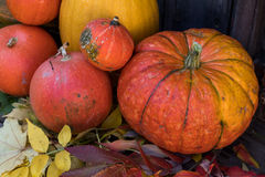 Big bright orange pumpkins on old dark wooden background Royalty Free Stock Image