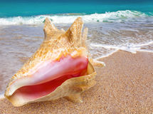 Big bright shell lies on a beach near the sea Royalty Free Stock Image
