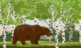 Big brown bear in a birch forest. Wild animals of Russia, USA, Canada and Scandinavia royalty free illustration