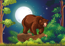 Big brown bear in full moon night Royalty Free Stock Photography