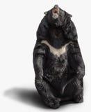 Big brown bear Stock Photo