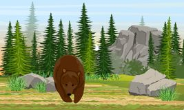 Big brown bear in the meadow. Spruce forest, stones and mountains, grass. The nature of Europe and America. Ursus arctos. vector illustration