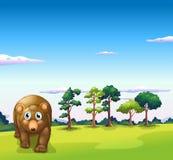 A big brown bear walking Stock Photography