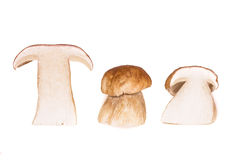 Big brown Boletus edulis mushrooms Stock Photo