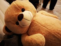 Big brown color terry bear stock photography
