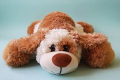 Brown toy dog. Very cute brown toy dog laying on the blue background royalty free stock photos