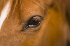 Big brown eye of a brown horse royalty free stock image