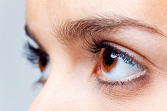 Big brown eyes. Close up of a females brown eyes stock images