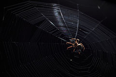 Big brown garden spider in center of his web with small insect prey at night Stock Photo