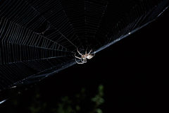 Big brown garden spider in center of his web with small insect prey at night Stock Photography