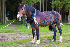 Big brown horse standing near forest Stock Photos