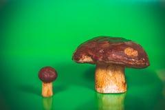 Big brown mushrooms boletus and the flywheel Royalty Free Stock Photography