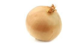 Big brown onion Royalty Free Stock Photo