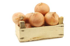 Big brown onions in a wooden crate Royalty Free Stock Photos