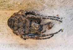 Big brown scary spider close up Stock Photos