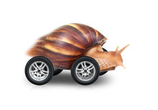 Big brown snail is fast driving on wheels. Isolated on white background Royalty Free Stock Photography