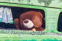 Big brown teddy bear. stock images