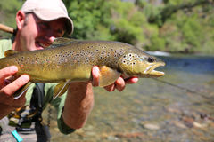 Big brown trout in the hands of fisherman Royalty Free Stock Photography
