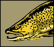 Big brown trout head vector Stock Photography