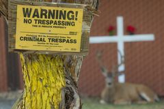 Big buck lays behind no trespass sign. With a cross behind him stock images