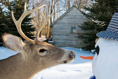 Big buck and snowman Stock Images