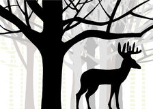 Big buck or whitetail deer standing in forest of oak and birch trees. Vector design of large buck or whitetail deer with huge antlers in woods or forest, layers stock illustration