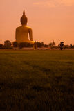 Big Buddha on The Rice Field Stock Images