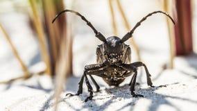 Big bug Royalty Free Stock Photo