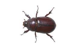 Free Big Bug Royalty Free Stock Photos - 9620858