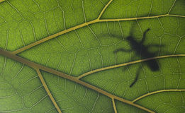 Big bug on a leaf Stock Photo