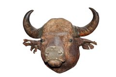 Big bull head Royalty Free Stock Images