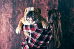 Big bulldog in the hands Stock Photography