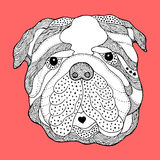 Big bulldog sugar skull head, cute dog day of the dead, vector Royalty Free Stock Image