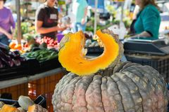 Big Bumpy Beautiful Dark Pumpkin with Cut out Wedge Slice. Dent Texture Seeds. Farmers Market. Thanksgiving Harvest Fall Royalty Free Stock Photo