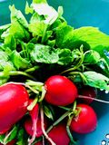 Prepping for What's in the White Bowl series. Radishes, bold and red stock images