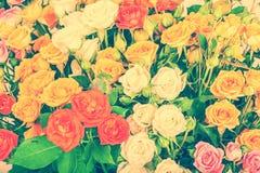 Big bunch of beautiful roses Royalty Free Stock Photos