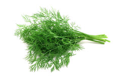 Big bunch of dill Royalty Free Stock Photo